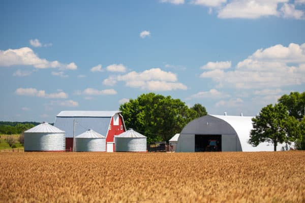 Landscape of farm buildings and wheat