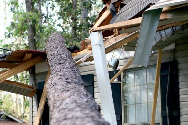 File a home insurance claim when a tree falls on your house